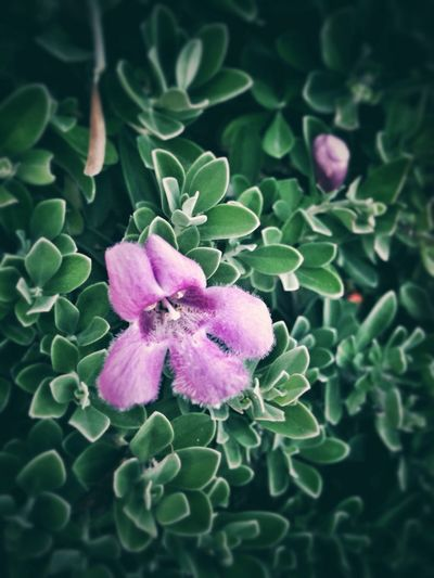 photography eases my stress Flower Purplish Plant Photography Plants And Flowers Plant Lover Ilove Photography Eyeem Philippines
