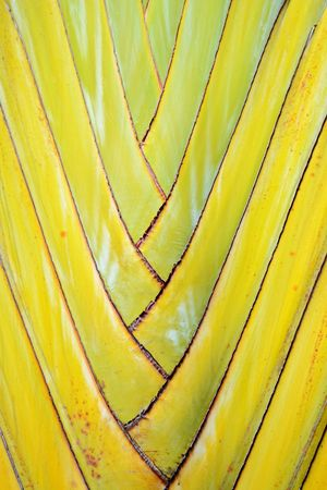 Close-up Colours Of Nature Textured  Yellow Texture Pattern Textures And Patterns Nature Abstract Abstract Yellow Color Yellow Tones