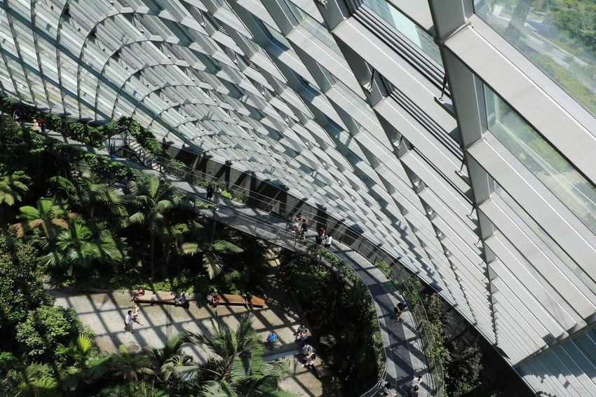 Architecture Building Exterior Built Structure Modern Outdoors City Roof No People Treetopwalk Growth Cloud Forest Dome Travel Destinations Travel Singapore EyeEmNewHere The Purist (no Edit, No Filter) The Photojournalist - 2017 EyeEm Awards 3XSPUnity Gardens By The Bay Modern Shadows & Lights Beauty In Nature Miniature On top of the world Break The Mold The Great Outdoors 2017 Eyeem Awards Neighborhood Map