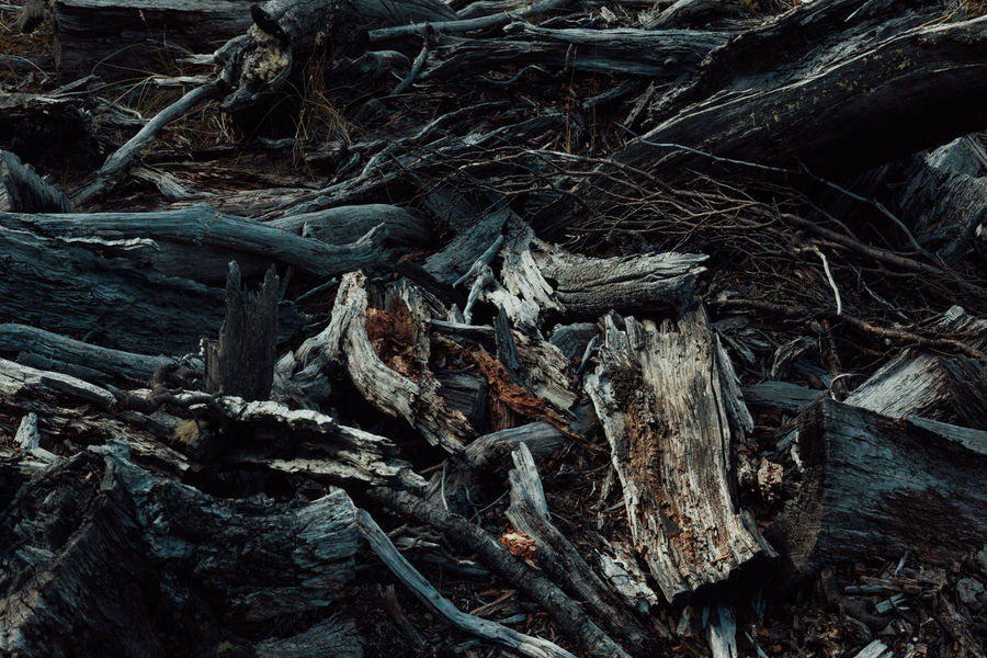 Nature Burned Wood Close-up Complexity Day Dry Wood Full Frame High Angle View Nature No People Outdoors Still Still Life Tangled