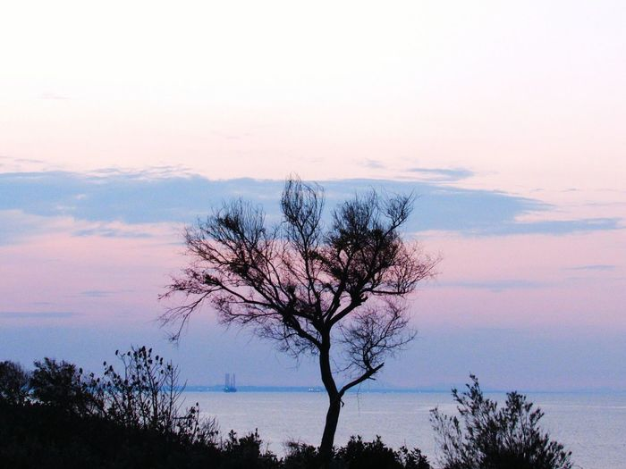 Tree Nature Sky Beauty In Nature Sunset Landscape Horizon Over Water Outdoors No People Bare Tree Day Water Monastir سماء Urban Skyline Tunisia Canonphotography Tranquil Scene AboutLastNight Walking Tranquility بحر Beauty In Nature Nature Photography Close-up