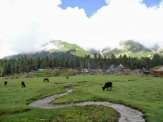 Fairy Meadows Nanga Parbat... EyeEm Masterclass EyeEm Nature Lover EyeEm Ambassador EyeEm Gallery