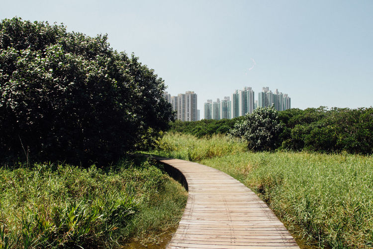 Beauty In Nature Boardwalk Clear Sky Diminishing Perspective Field Footpath Grass Grassy Green Green Color Growth Narrow Nature Pathway Plant The Way Forward Tranquil Scene Tranquility Tree Walkway