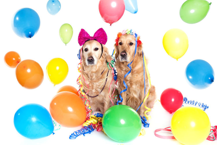 Decorated Dogs Surrounded By Balloons