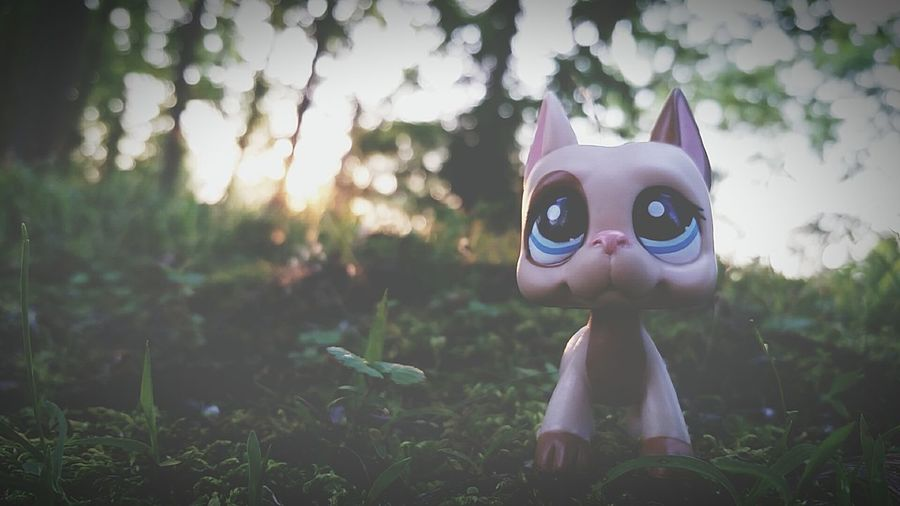 LPs Lpsphotography Littlestpetshop Toy Nature Sunset