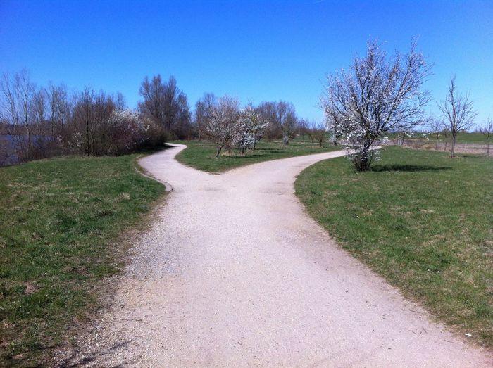 Die Wege Neue Chancen Wege Verlassen Leben Entscheidungen Abzweig First Eyeem Photo