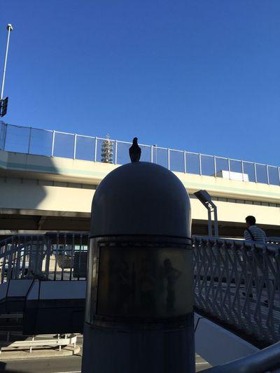 Dove! Photography Taking Photos Japan Streetphotography Hello World Yokohama