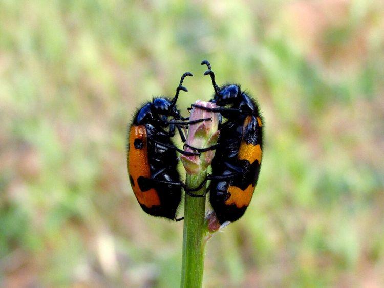 Albania Ohridlake Insects