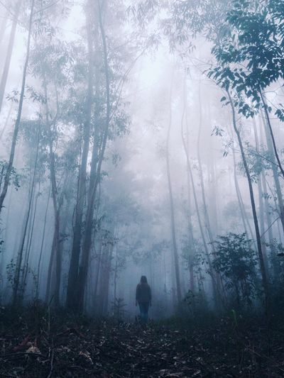 Rear view of woman walking through forest in foggy weather