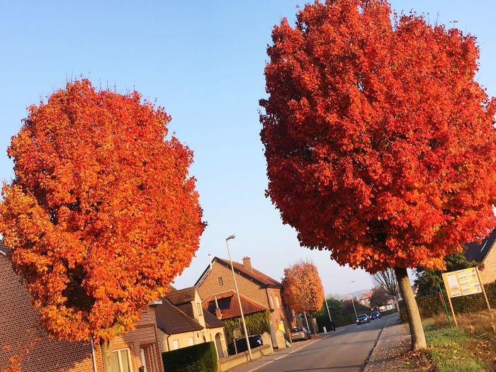 Laatste herfst dag... Nature🌳 First Eyeem Photo