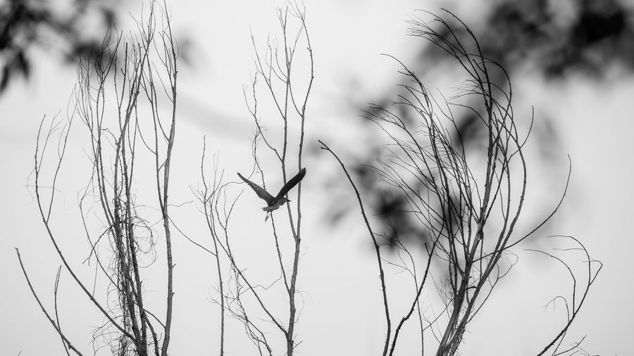 Close-up of a bird flying against the sky