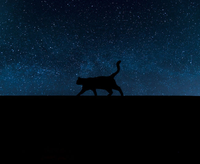 Instagram : anto_v9 Animal Themes Night Silhouette Animal Animal Wildlife Star - Space One Animal Mammal Sky Domestic Animals Nature Vertebrate No People Space Side View Domestic Standing Land Full Length Livestock Astronomy Dark Herbivorous Milky Way Starry Sky Starry Night Blue Sky Blue Background Cat Lovers Cat Shadow Silouette & Sky Cats Animals In The Wild Astrophotography EyeEm Best Shots EyeEmNewHere EyeEm Nature Lover EyeEm Selects EyeEm Gallery Nature_collection Naturelovers Landscape_Collection Landscape_photography Outdoors Long Exposure