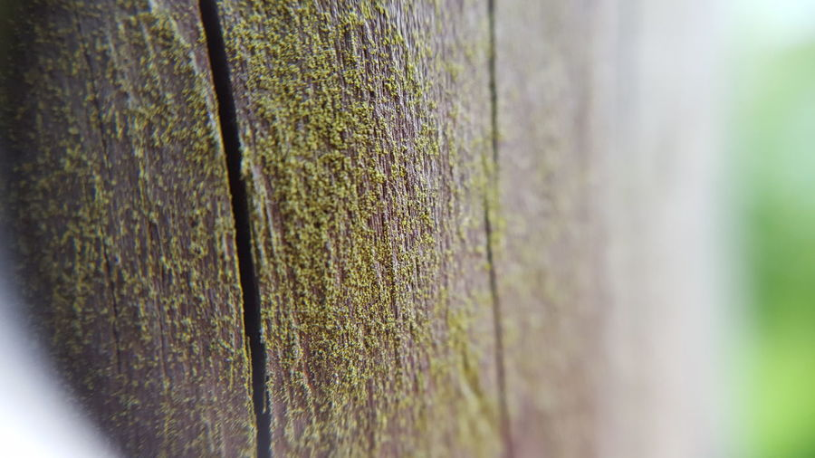 Macro Taking Photos moss on wood Check This Out