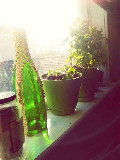 Plants Herbs Life Medicinal Food Horticulture