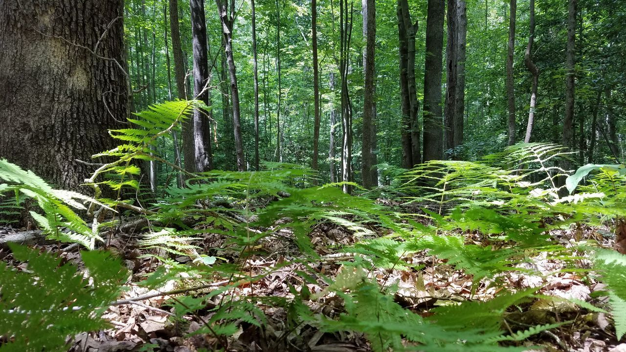PLANTS GROWING ON LAND IN FOREST