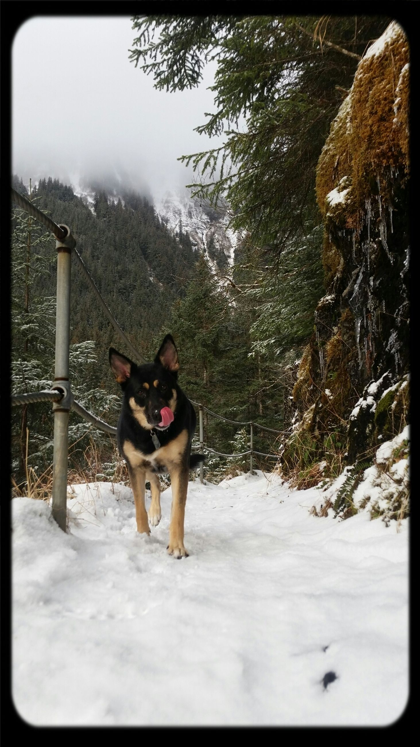 snow, winter, cold temperature, season, weather, transfer print, domestic animals, covering, dog, landscape, auto post production filter, nature, tranquil scene, tree, tranquility, pets, field, full length, covered, mountain