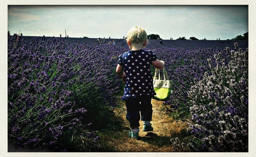 An afternoon amongst the lavender fields down the road from our house. Adventures
