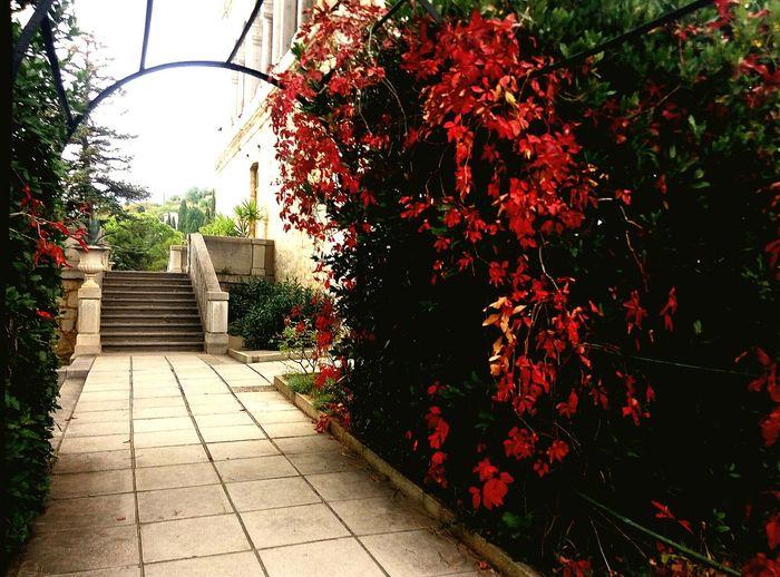 Krym Crimea Red VSCO VSCO Cam Flowers Palace Крым ялта First Eyeem Photo