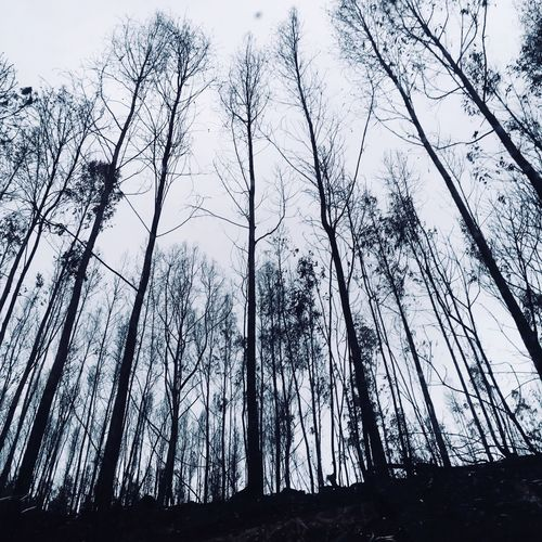 End Calamity Burnt Trees Tree Low Angle View Plant Sky Forest Land Beauty In Nature Nature WoodLand Outdoors