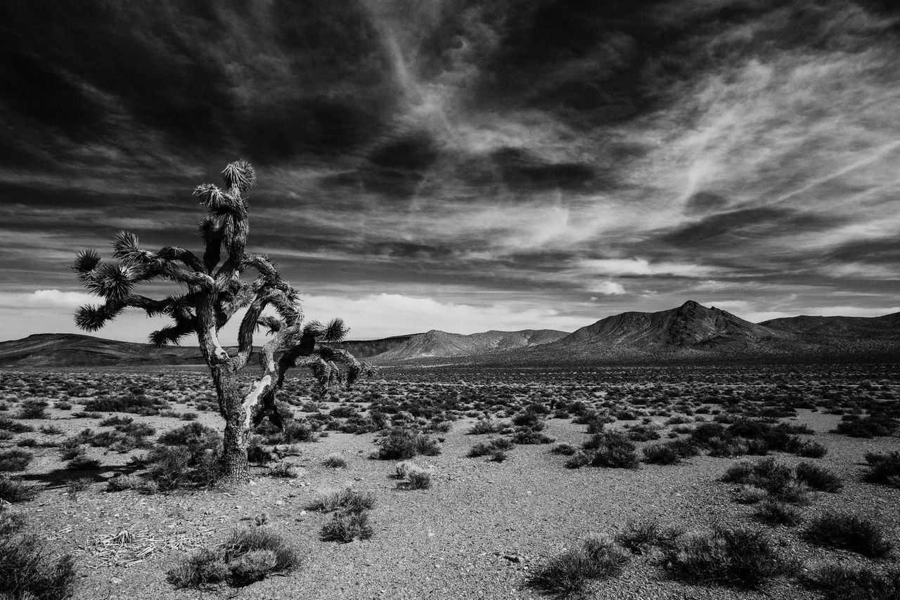 landscape, sky, tranquility, nature, tranquil scene, scenics, outdoors, beauty in nature, cloud - sky, desert, no people, arid climate, day, tree
