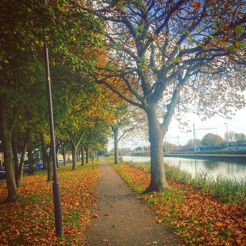 Photography Ireland Water Tranquility Tree Nature Beauty In Nature Autumn Outdoors Sunlight Change Growth Tranquil Scene No People Scenics Day Sky Dublin Sunlight First Eyeem Photo Nature Love FirstEyeEmPic Beauty In Nature Ireland