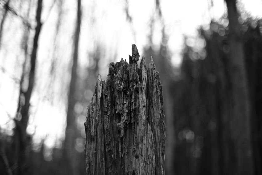 Tree Wood - Material Tree Trunk Focus On Foreground Textured  Outdoors Bark B&w Forest