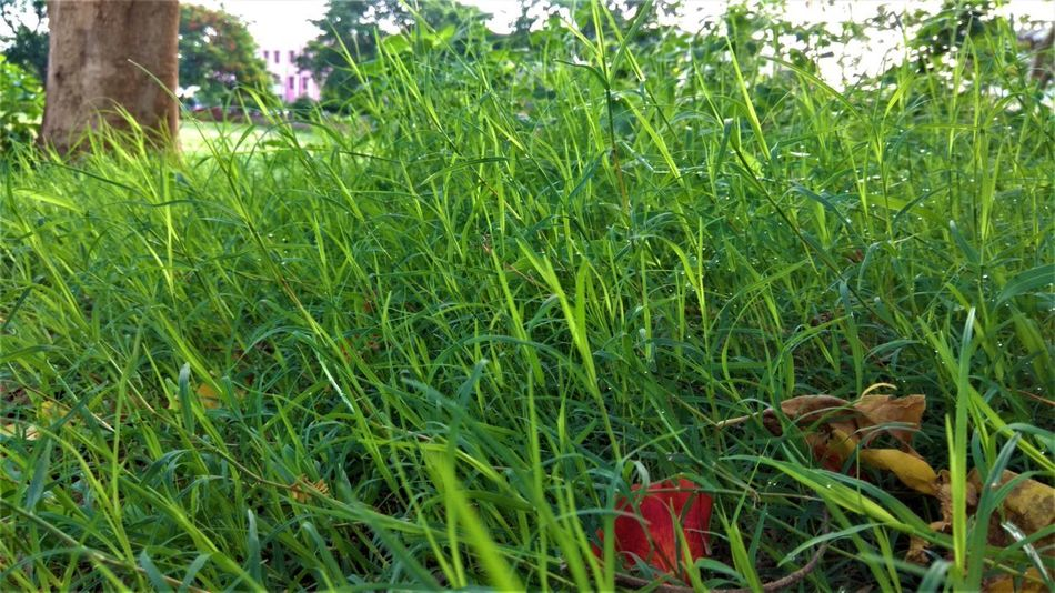 grasses Grass Green Beauty In Nature Close-up Field Freedom Freshness Garden Green Growth Land Nature Outdoors Park Plant Part Toy