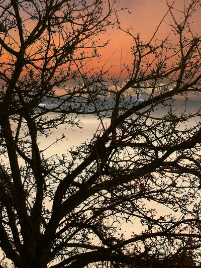 Tree Sunset Silhouette Branch Nature Dusk No People Beauty In Nature Low Angle View Tranquility Outdoors Sky Bare Tree Day