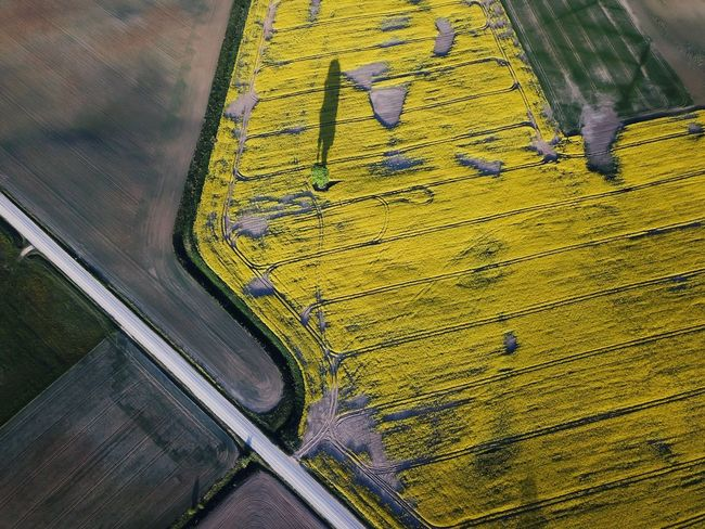 Fields of Lithuania Yellow High Angle View No People Day Pattern Close-up Transportation Green Color Nature Outdoors Road
