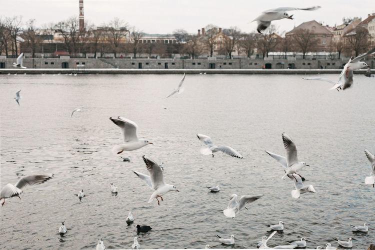 Flock of birds flying over water