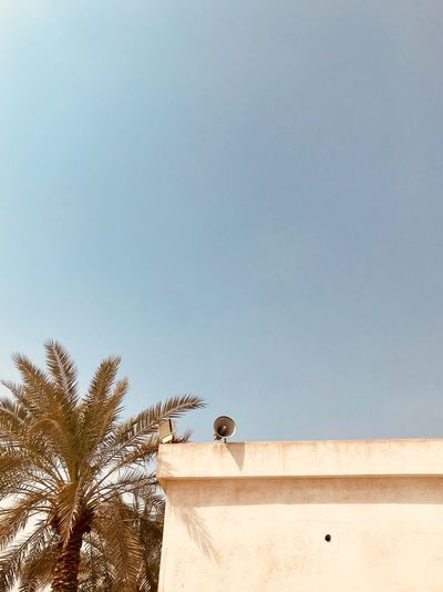 Arabian Moment Sky Animal Themes Animal Vertebrate Animals In The Wild Copy Space Animal Wildlife Tree Perching One Animal Outdoors Built Structure Clear Sky Architecture No People Nature Day Low Angle View Plant Bird
