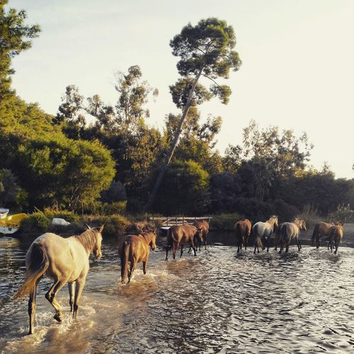 Horses Camping OpenEdit Photography This Week On Eyeem Hello World