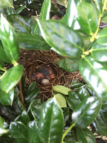 2015 | Baby Robins in my bushes of my former home | Photo: Michael F. Pichette Baby Birds Taking Photos Virginia
