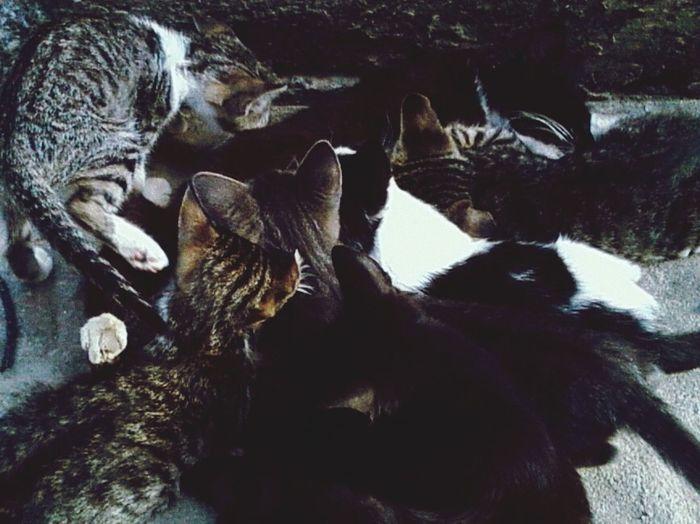 Amamentação Lovecat  Gatos L muitos gatos Animallife