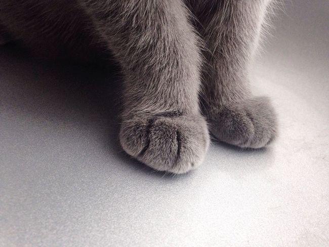 Cat One Animal Domestic Animals Animal Leg Cat Moments Tati Love First Eyeem Photo