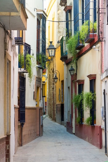 Street in Seville old city Architecture Building Exterior Built Structure City Day No People Outdoors Town Walkway