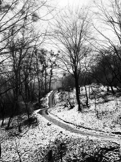 Trail through the snow-covered hills beside the Teteriv River in Zhytomyr, Ukraine. Zhytomyr Ukraine Житомир Україна