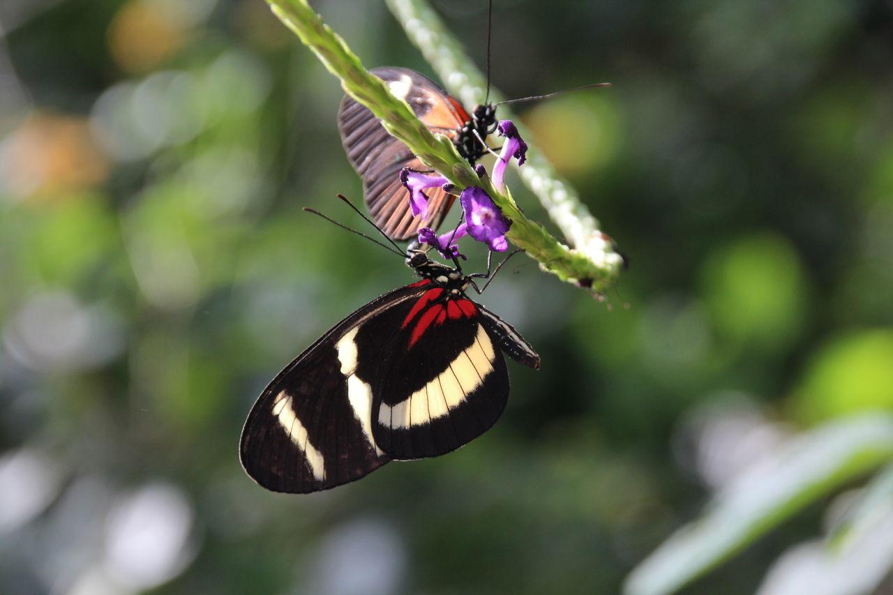 Close-Up Of Butterflies On Flower