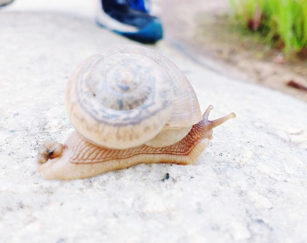 As slow as snail Animals In The Wild Animal Themes One Animal Outdoors Close-up Animal Wildlife No People Day Gastropod Nature Long Goodbye EyeEmNewHere Welcome To Black Live For The Story