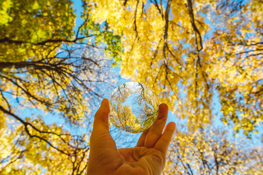 Autumn through a glass ball Autumn Collection Crystal Ball Glass Ball Lietuva Nikon D750 Yellow Leaves Adult Autumn Beauty In Nature Blu Sky Branch Change Close-up Day Focus On Foreground Holding Human Body Part Human Hand Leaf Lifestyles Look Up Nature One Person Outdoors People Personal Perspective Real People Sky Tree Yellow