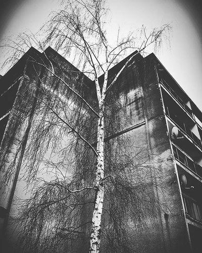 Tre Blokhaus Bulding Architecture Nature Dark Darkness Gloomy Grim Monochrome Blackandwhite
