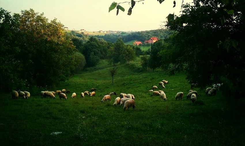 Sheep@Work i like living here and hate living here at the same time:-P