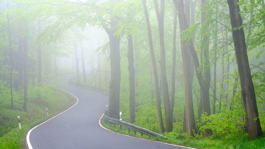 Beauty In Nature Branch Day Fog Forest Grass Green Color Growth Landscape Nature No People Outdoors Road Scenics Sky The Way Forward Tranquil Scene Tranquility Tree Tree Trunk Winding Road