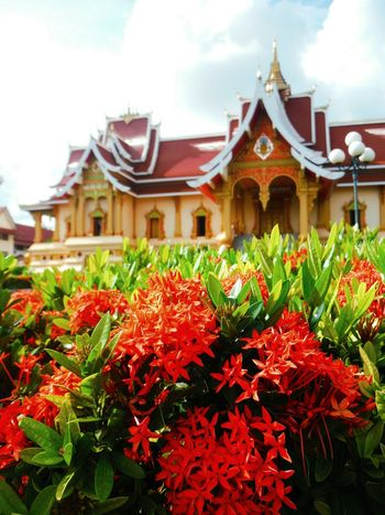 Pha That Luang Pha That Luang Laos Phathatluang Thatluangtemple That Luang Laos Temple Laos Travel Vientiane Vientiane Laos Vientiane, Laos Temple Architecture Place Of Worship Travel Laos Explore Laos Tourist Destination Tourist Attraction  Travel Destinations Flower Fragility Freshness Red Flower Focus On Foreground Temple In The Background Architecture Religious