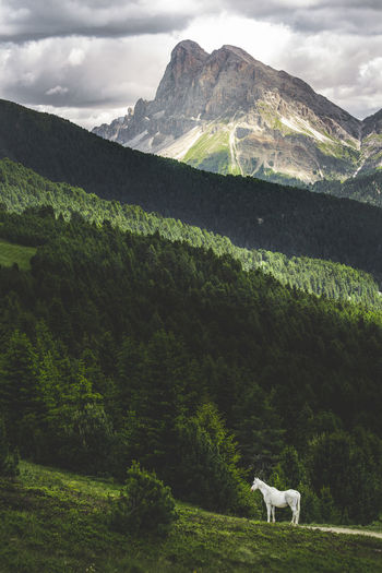 The Dolomites around Val Gardena Sky Nature Mountain Dolomites Alps Alps Italy Green Color Tranquility Landscape_photography Landscape White Horse Horse Magic Tree Animal Themes Scenics - Nature Animal One Animal My Best Photo