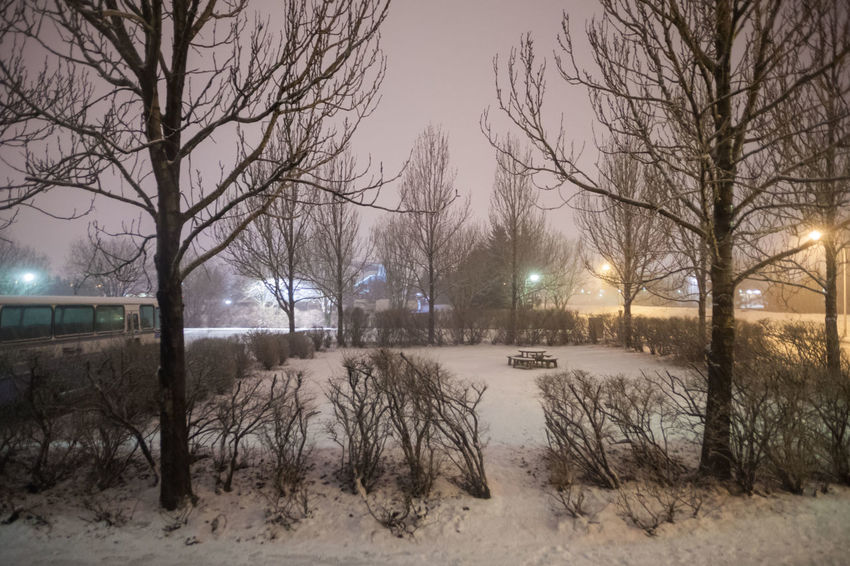 Reykjavik city hostel outside view of ice during winter Reykjavik Reykjavik Harbour Snow ❄ Bare Tree Beauty In Nature Bleak Branch Cold Cold Temperature Frost Frozen Ice Ice Hockey Ice Rink Illuminated Nature Night No People Outdoors Reykjavik Skyline Reykjavikpride Reykjavikstreetart Scenics Sky Snow Snowdrift Snowing Tree Weather Winter
