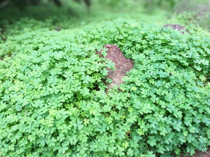 Las Raíces Tenerife Green Color Nature Beauty In Nature No People