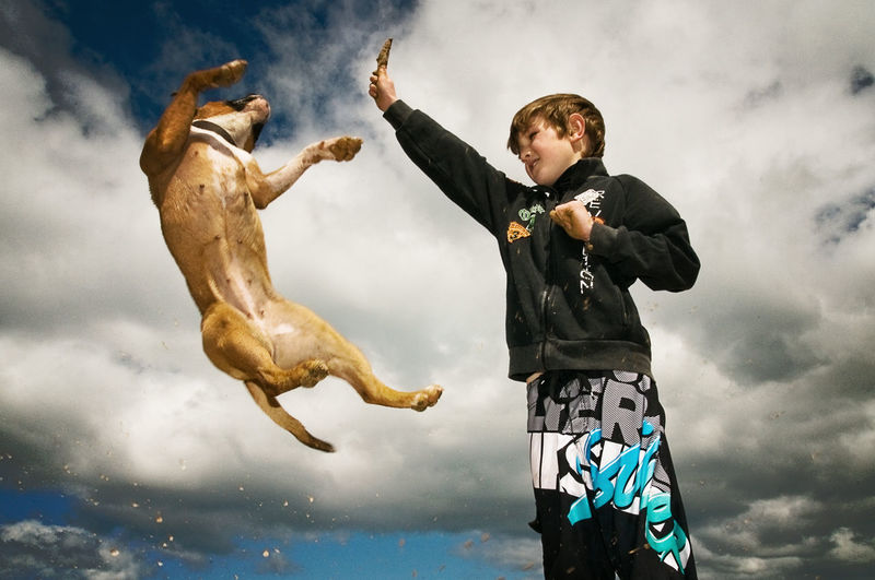 Low Angle View Of Dog Fetching Stick From Boy Against Cloudy Sky