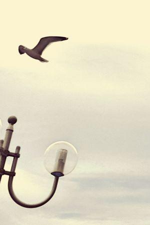 Wind Bird Fly Sky Grey