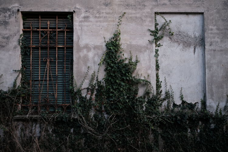 Plants growing on old building